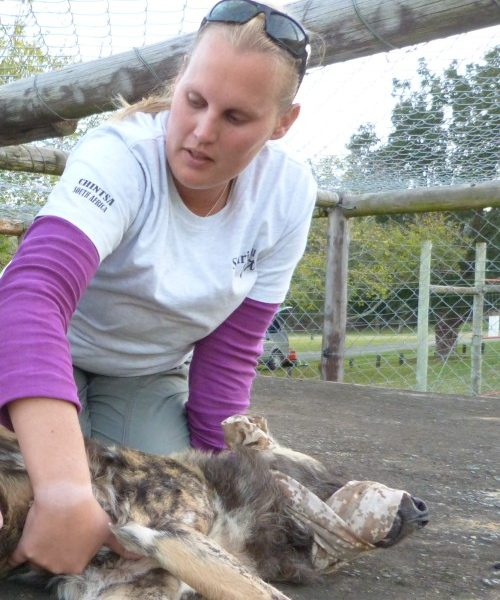 International veterinary experience, animal handling, non-profit clinic, hands-on volunteer opportunity