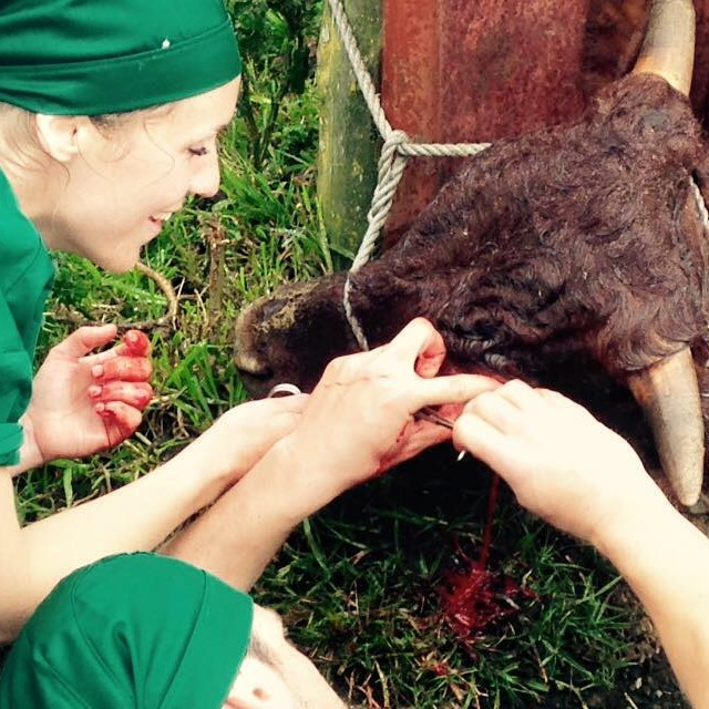 Large animal veterinary work in South Africa