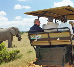 Vet students enjoy going to Addo Elephant National Park during their free time after a long week of veterinary experience in South Africa