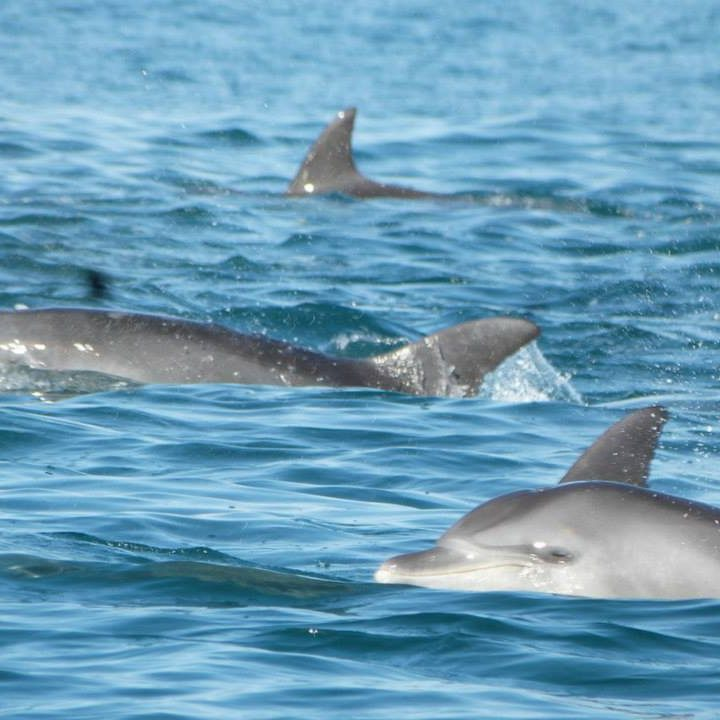 Weekend activity - dolphins on Chintsa beach, South Africa