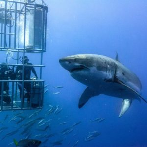 Vet students enjoy shark cage diving during their free time after a long week of veterinary experience in South Africa