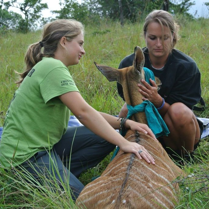 Exotic vet work in South Africa