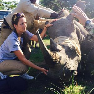 Volunteer vet students participating in a rhino game capture for veterinary experience in South Africa