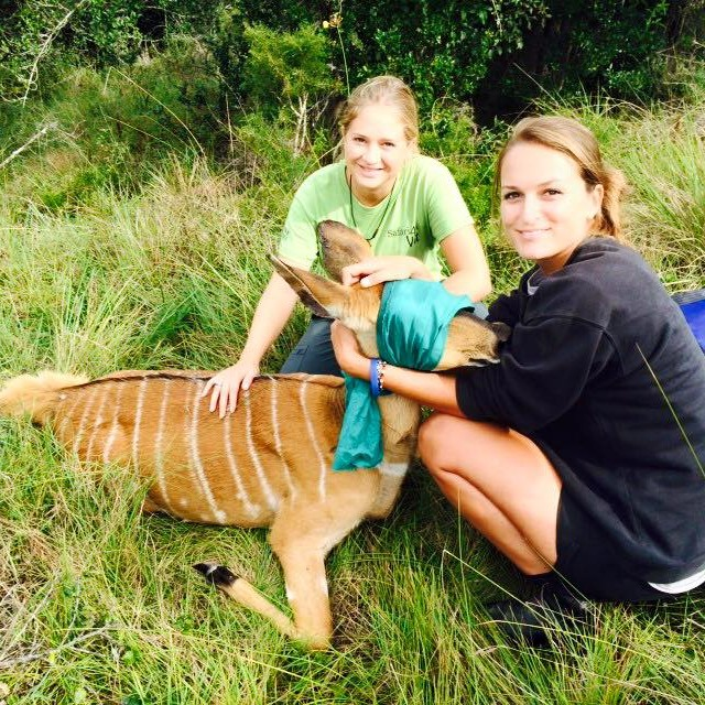 Vet Experience in South Africa