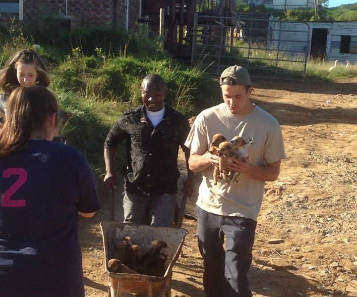 Volunteer vet students treating and dipping dogs for veterinary experience in a local South African village