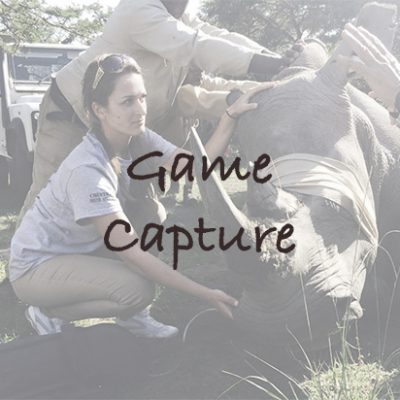Game Capture in South Africa