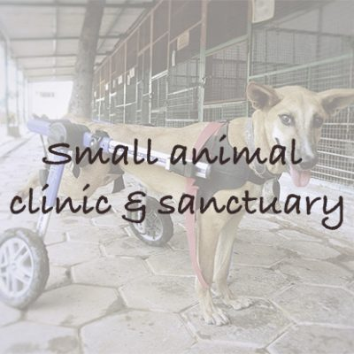 Small Animal Clinic & Sanctuary in India