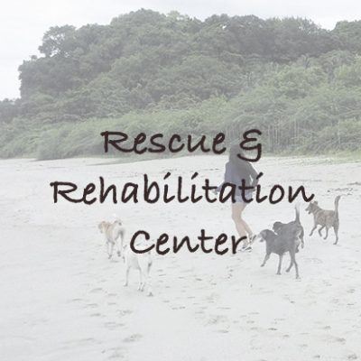 Rescue & Rehabilitation Center in the Philippines