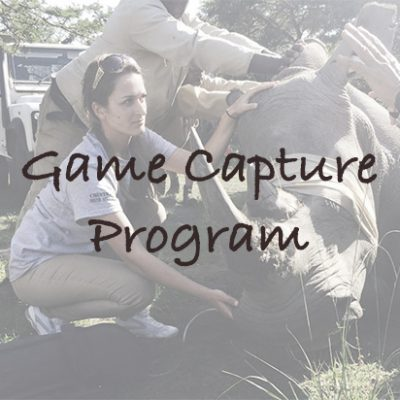 Game Capture Program in South Africa
