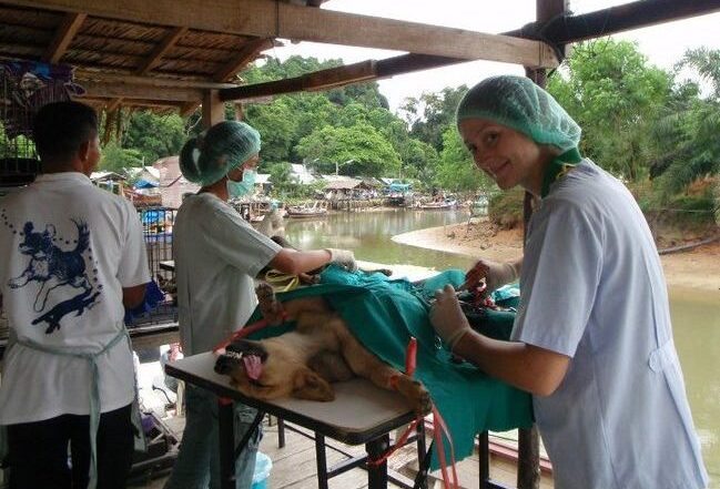 Surgical Training Externship in Thailand