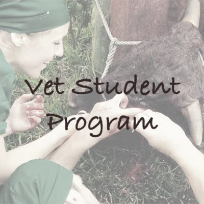 Vet Student Program in South Africa